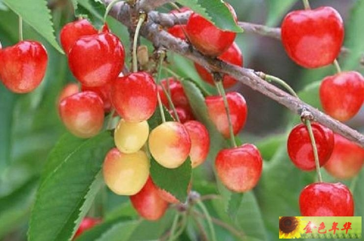 秋天的果园图片 秋天 果园图片 秋天 果园 果园